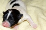 Speedys erste Wochen! - © www.lucky-dog.at