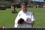 Video mit Speedy - Floh (5 Monate alt) - © www.lucky-dog.at
