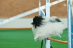 Speedy - mein erstes Agility Turnier - © www.lucky-dog.at